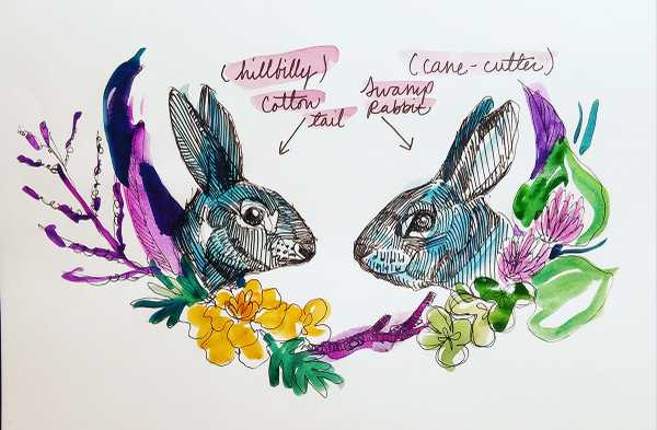 rabbitssized.jpg