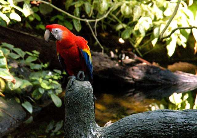 1024px-Ara_macao_-Moody_Gardens,_Galveston,_Texas,_USA-8a.jpg
