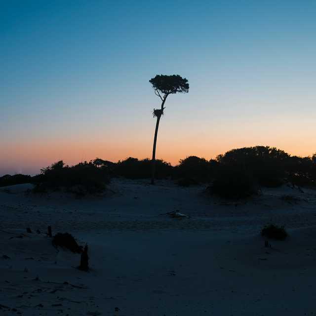 horn-island-tree.jpg