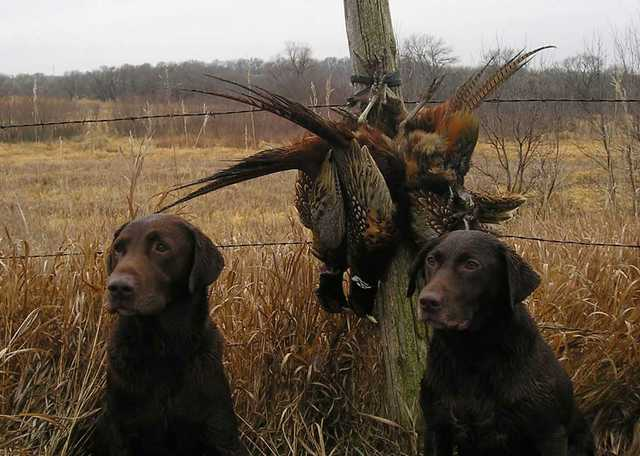 Hunting_dogs_with_catch.jpg