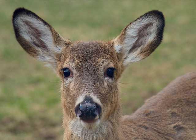 deer-2221546_1920.jpg