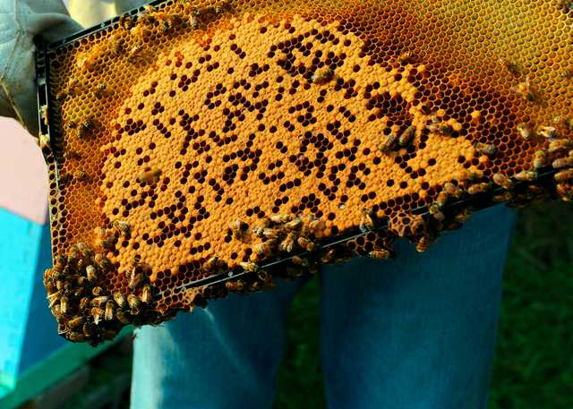 Bee_Keepers_Kevin_and_Stephen_Mixon_017.jpg