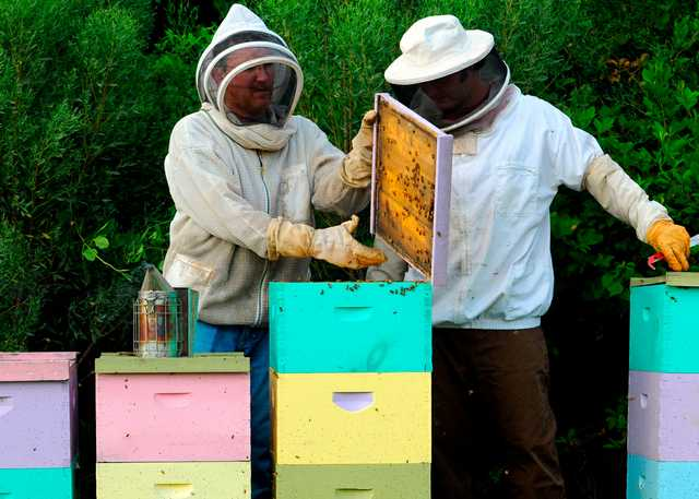 Bee_Keepers_Kevin_and_Stephen_Mixon_001.jpg